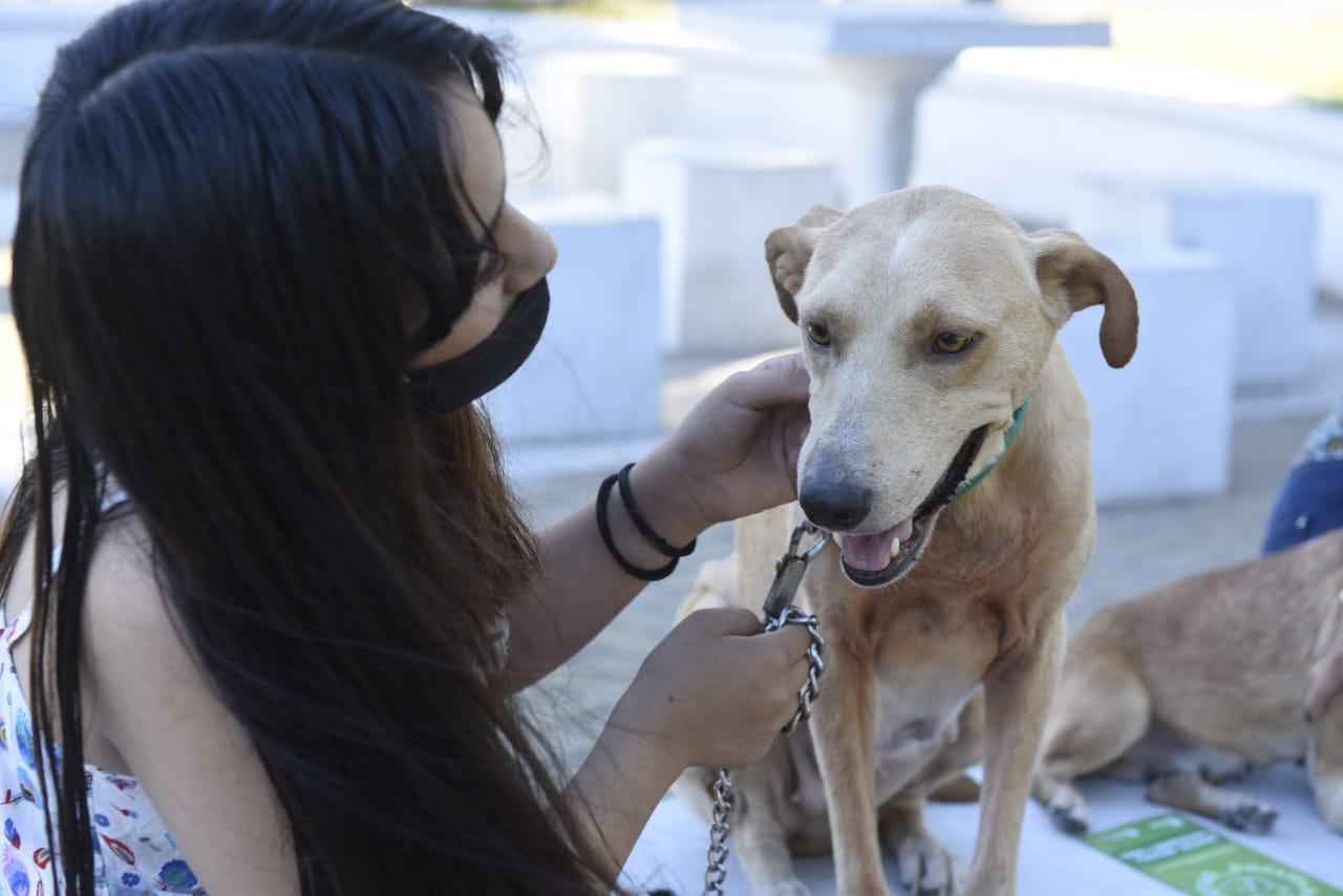 Malvinas Argentinas crea la primera Escuela de Mascotas municipal
